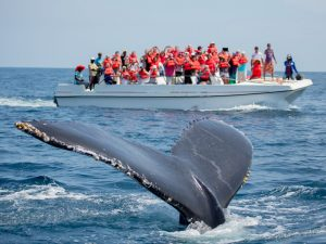 Best Time To Visit Seattle For Whale Watching